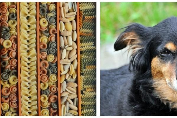 zdjęcie podzielone nadwa pola, wpierwszym różne rodzaje makaronu, wdrugim pies kundelek