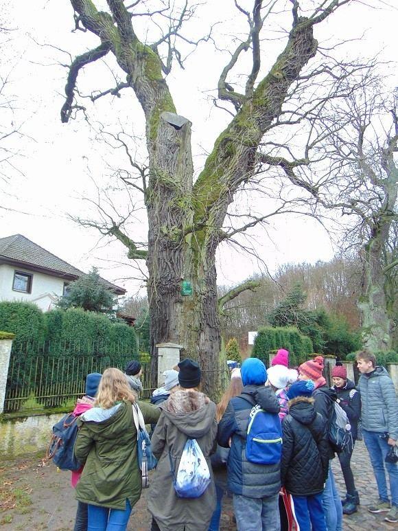 grupa młodzieży przy wielkim drzewie