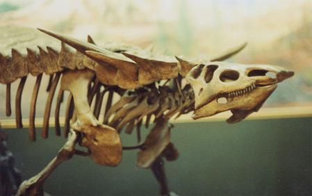Desmatosuchus haploceros