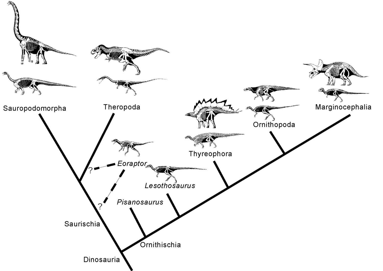 Palaeos Vertebrates Dinosauria Dendrogram