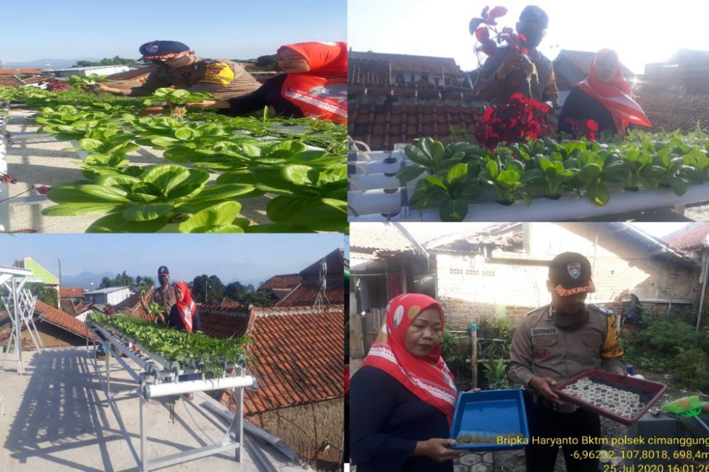 Sambang budidaya Sayuran Sistem hidroponik Lembur Tohaga Lodaya