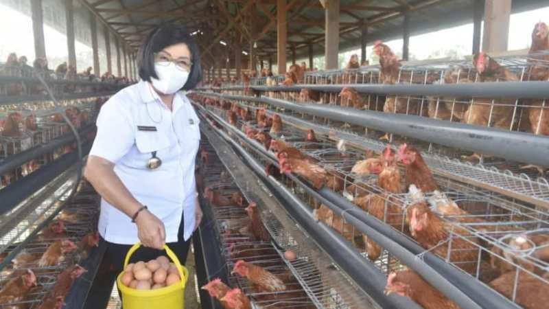 Panen Perdana Telor ayam di Desa Hurung Bunut. Wakil Bupati Gumas Apresiasi Pada Tani Bina Setia