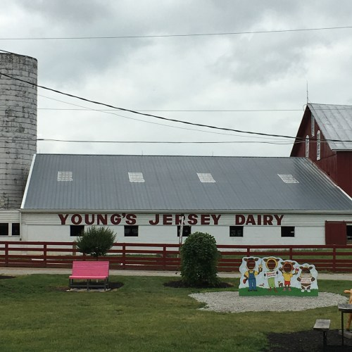 Young's Jersey Dairy