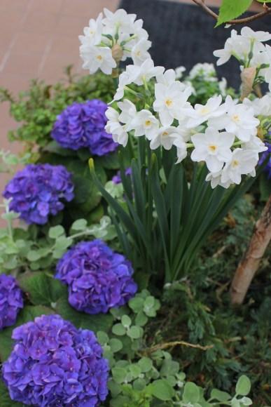 Krohn flowers