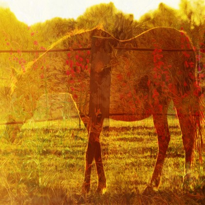 Experimental Horse and Flowers Sharp
