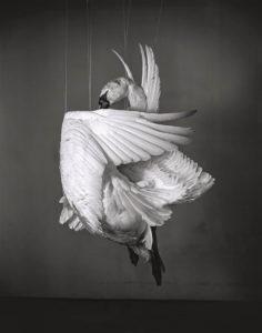 Learoyd. Headless man, 2010