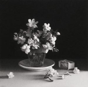 Pere Santilari. La efímera Bellesa, 2017