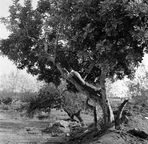 F. Miralles. L'arbre i l'home. 1975