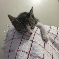 Dormia em qualquer lugar