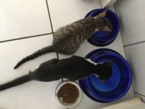 A primeira refeição lado a lado