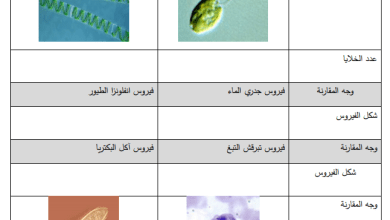 Photo of مجمع أوراق عمل الدرس الثاني لكافة المواد الدراسية للصف السادس الفصل الأول
