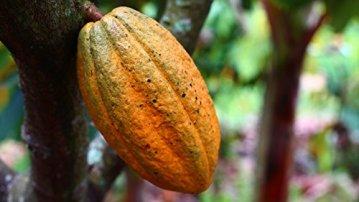 Naissance Kakaobutter, unraffiniert 250g BIO zertifiziert 100% rein - 2