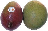 Obst & Gemüse Bio Mango Tomma Atkins / Kent / Amelie / Shelly (1 x 1 Stk) - 1