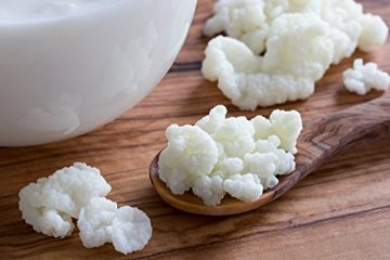 Original Milchkefir Knollen Starterkulturen für unendlich viel Kefirferment mit Anleitung und Erfolgsgarantie von Fairment ® … ( 330 ml (6 g Knollen)) - 2