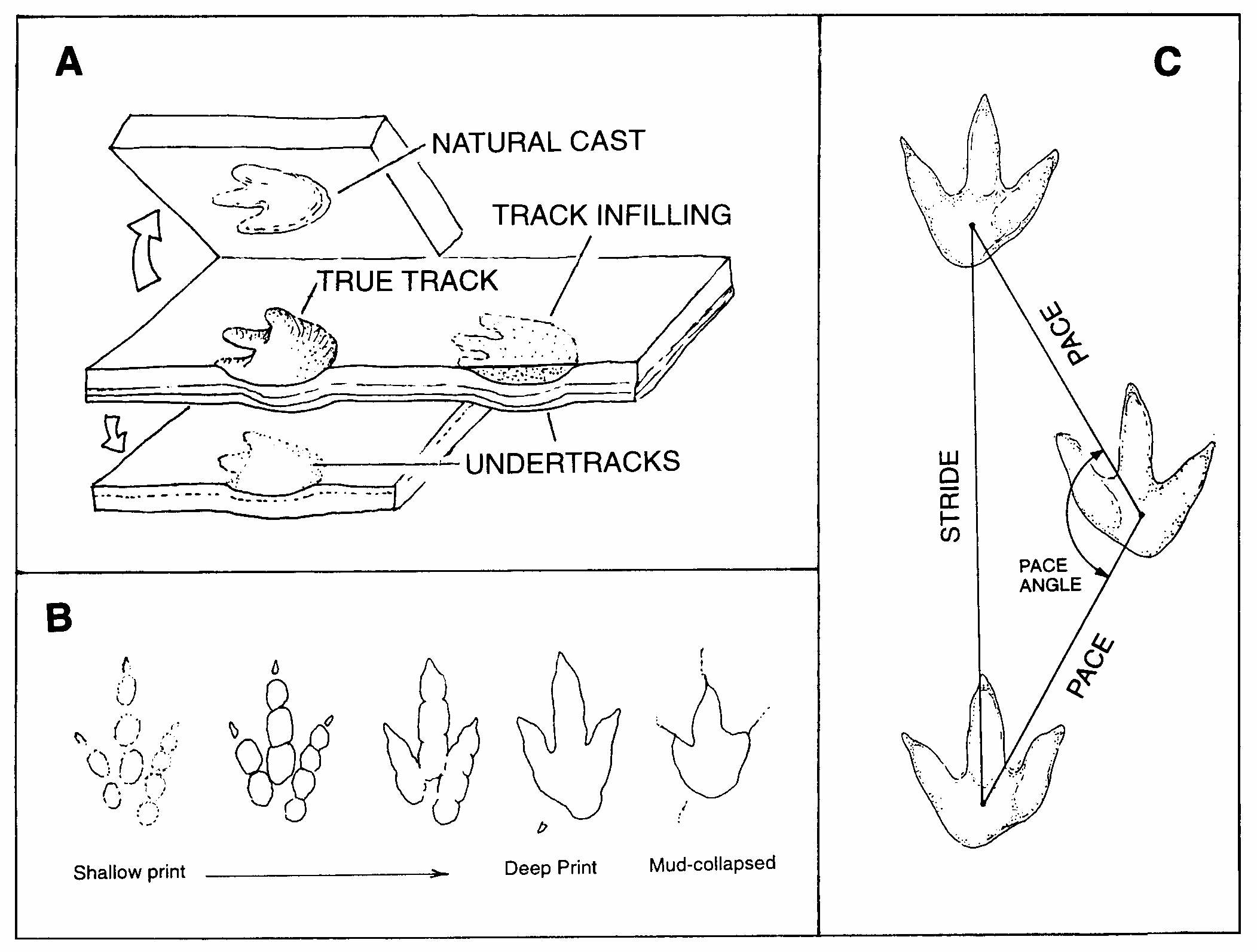 Overview Of Dinosaur Tracking
