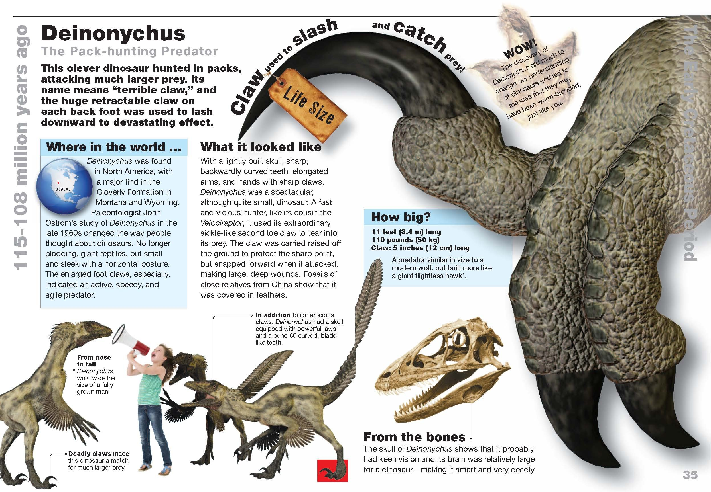 How Big Is Your Favorite Dinosaur Find Out Here Paleoaerie