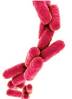 microbes-methylation