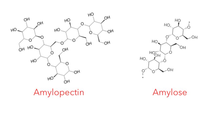 Amylose and Amylopectin molecules Chris Kresser