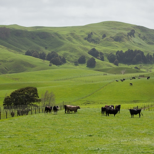 Wide zoom pasture - Pasture Perfect 100% Free-Ranging Grass-Fed Beef - Certified Paleo, Keto Certified - Paleo Foundation