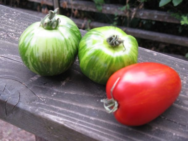 Beautiful and vibrant heirloom tomatoes