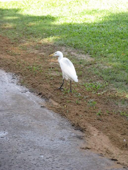 Some sort of heron or crane (anybody know?) that we saw walking around.