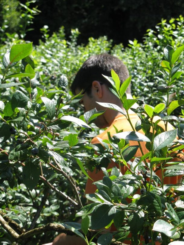 Jesse in the berry bushes.