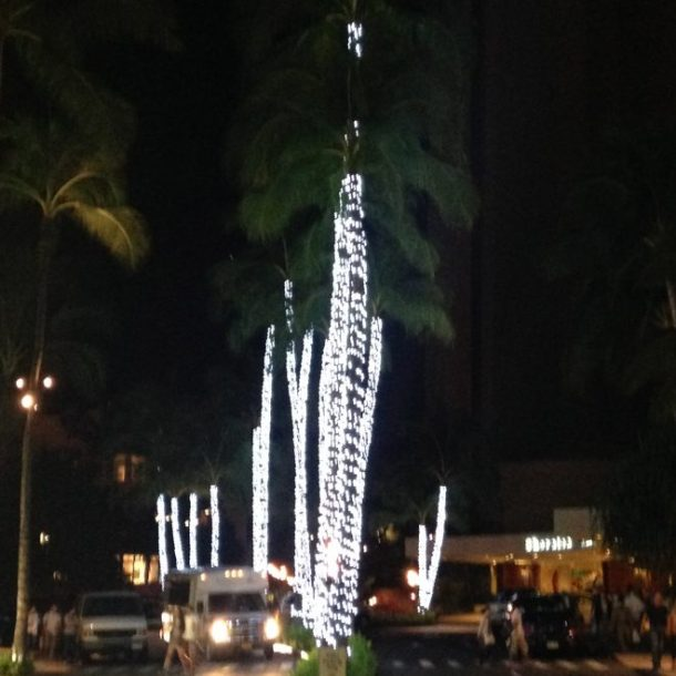 Love these palm tree lights downtown.