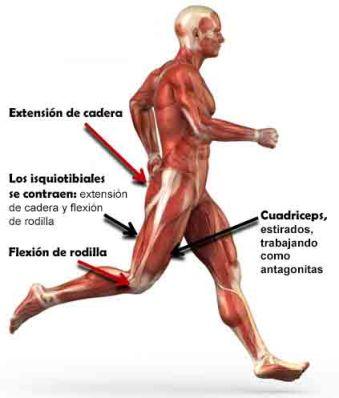 isquiotibiales corredor