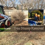 tree_stump_removal_regina05132018