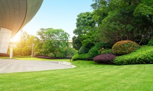 Modern Commercial landscaping company