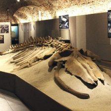 Museo Paleontologico Asti