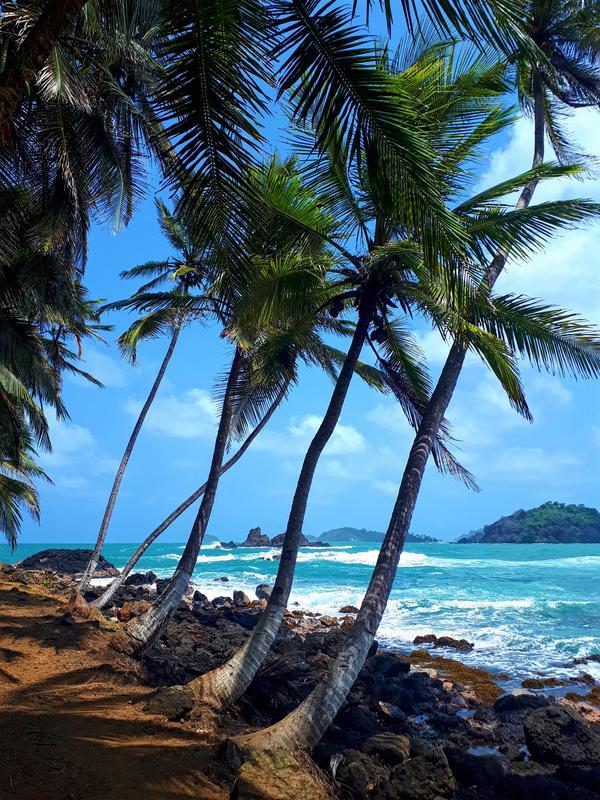 isla mamay palms