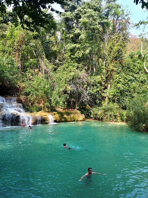 natural pool jungle