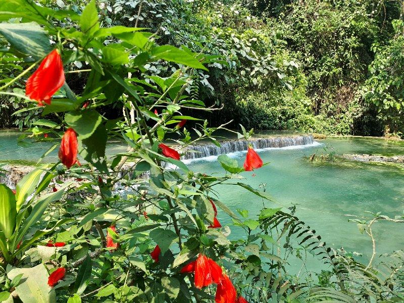 flowers jungle tropical