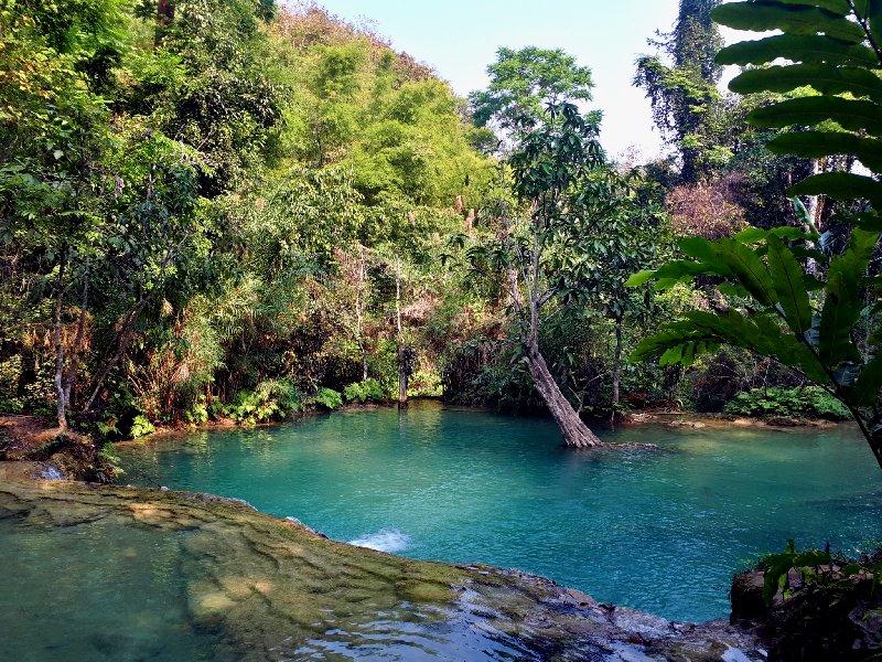natural jungle pool