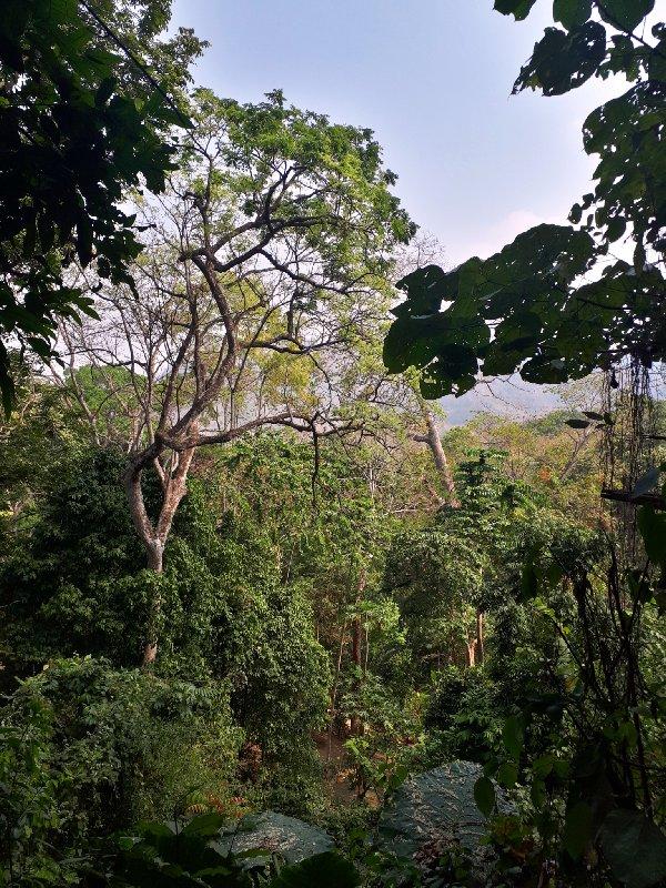 kuang si jungle