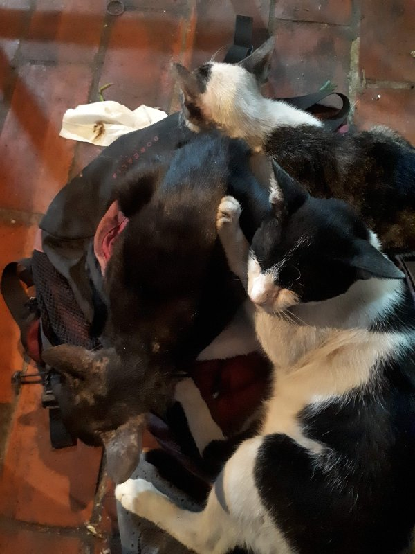 cats rucksack