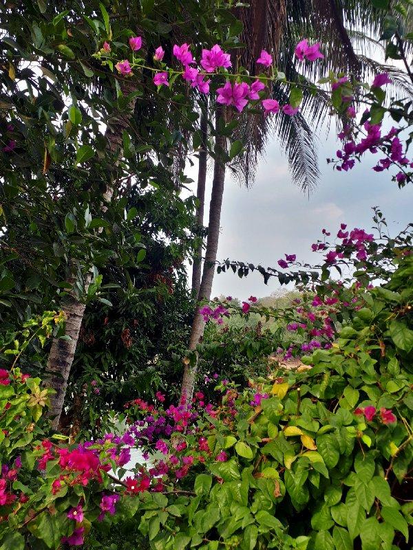 flowers riverview park
