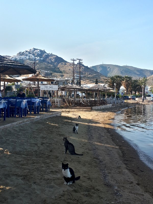serifos livadi cats beach