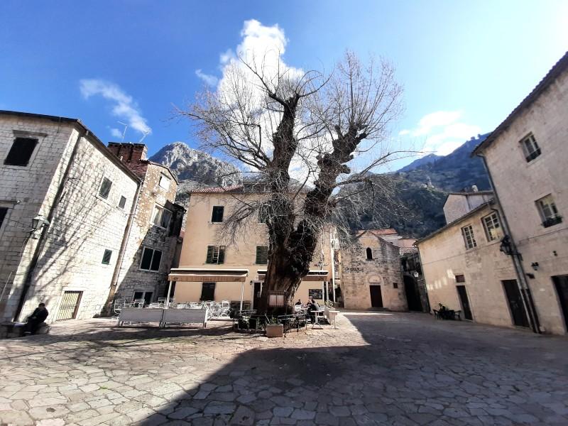 kotor square piazza