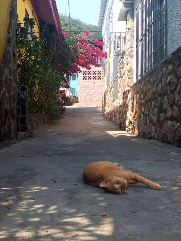 cat taboga island