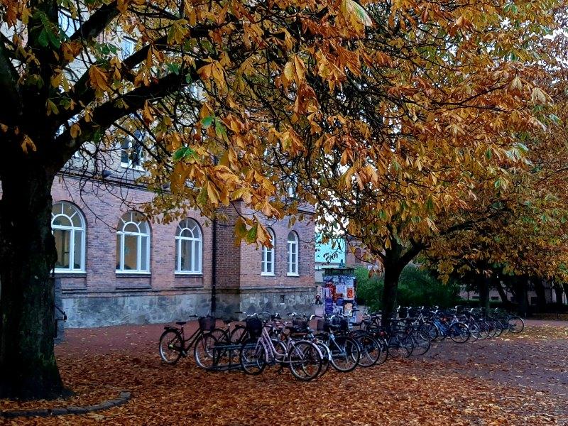 bikes university