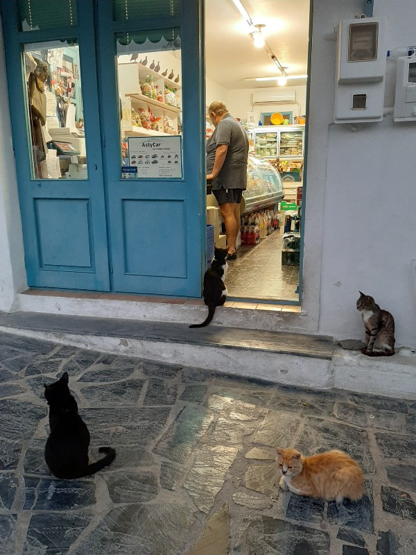 astypalea town cats