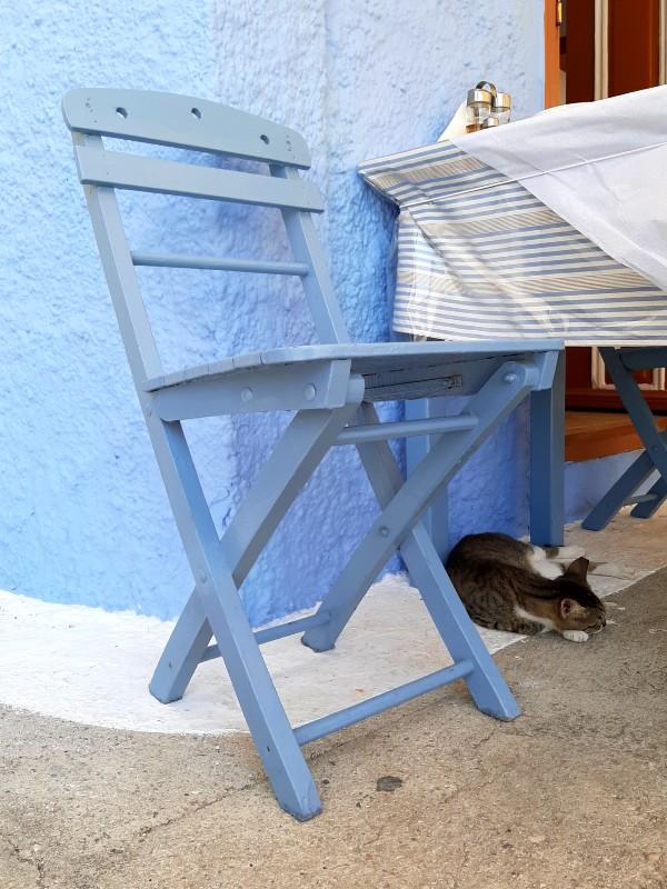 cat kastellorizo greece