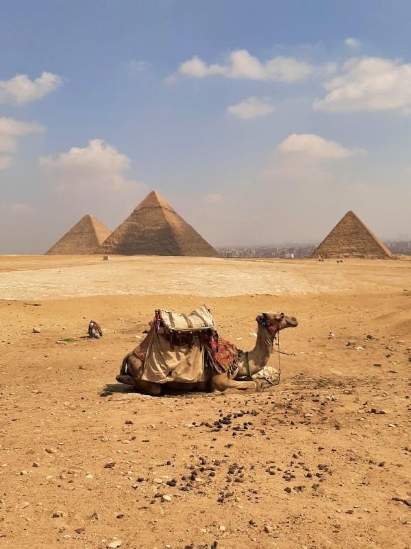 giza pyramids egypt trip report camel