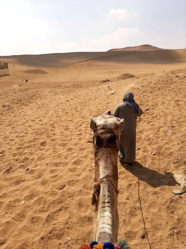 camel egypt cairo pyramids trip report