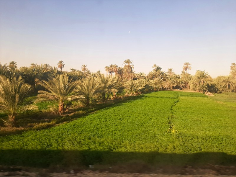 egypt agriculture field nile