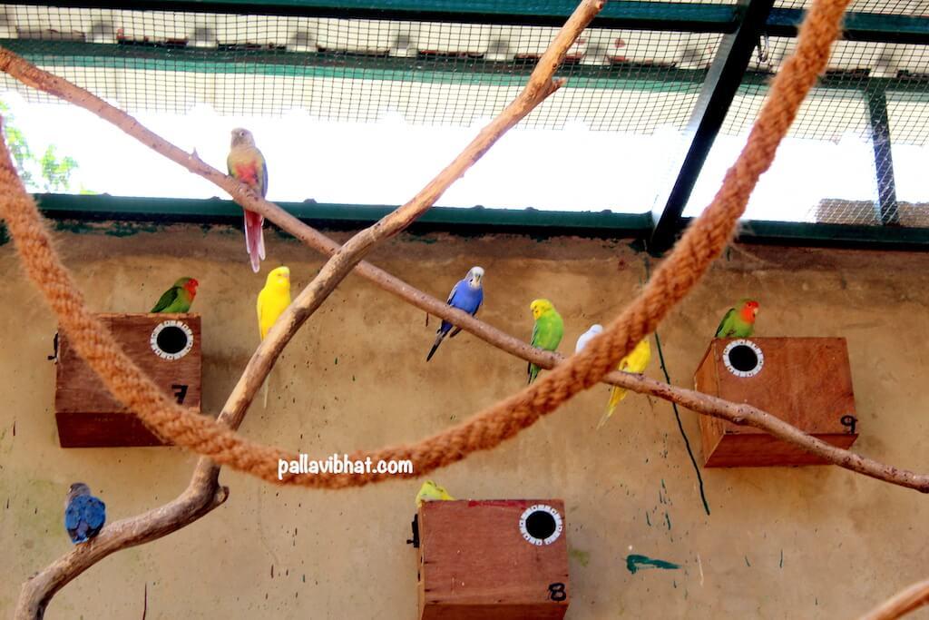Aviary-section
