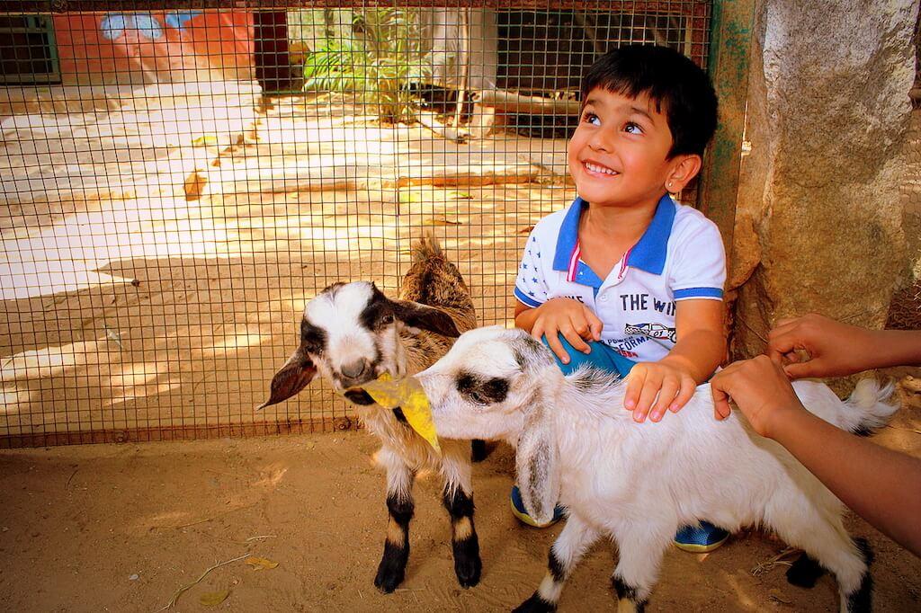 Goat - Prani the pet sanctuary