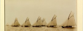 Tern sailing